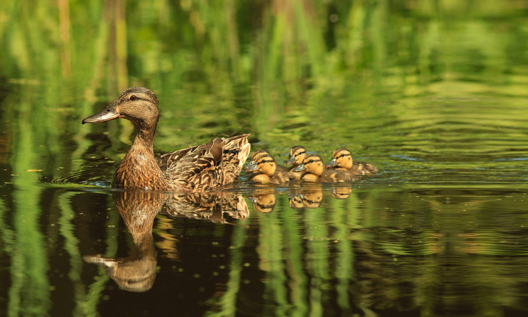 Ochrona Bioróżnorodności oraz ograniczenie  negatywnego oddziaływania ruchu turystycznego na obszary cenne przyrodniczo i promowanie lokalnych  walorów przyrodniczych na terenie Powiatu Płockiego